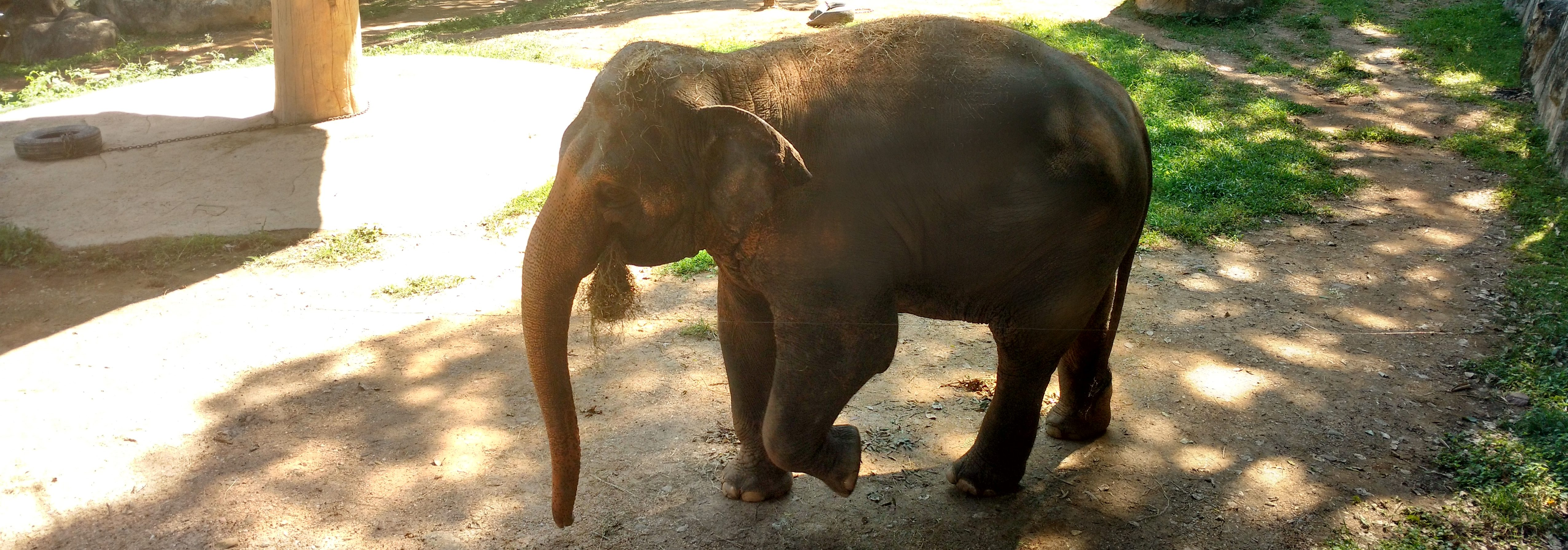 chiang mai zoo with an infant